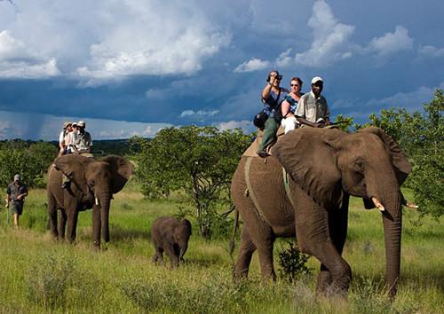 3 star  Imbabala Zambezi Safari Lodge - Zimbabwe - 3 Nights